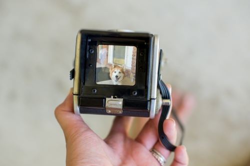 jmp- ttv blog-5252