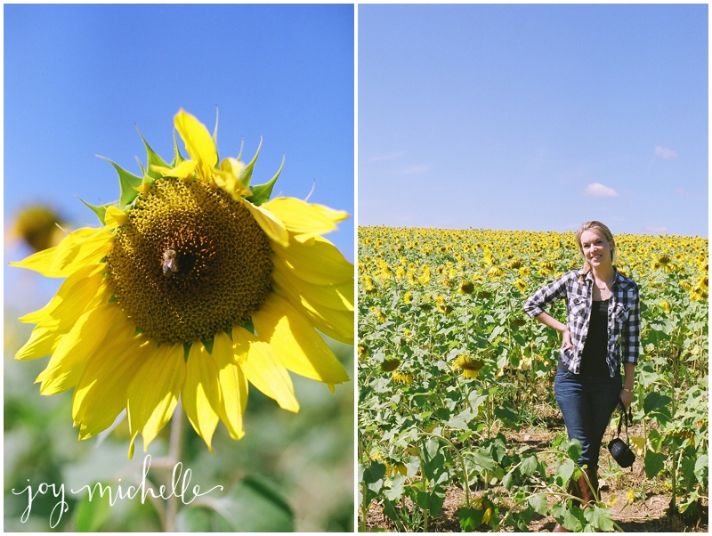 Maryland Sunflower Field on film